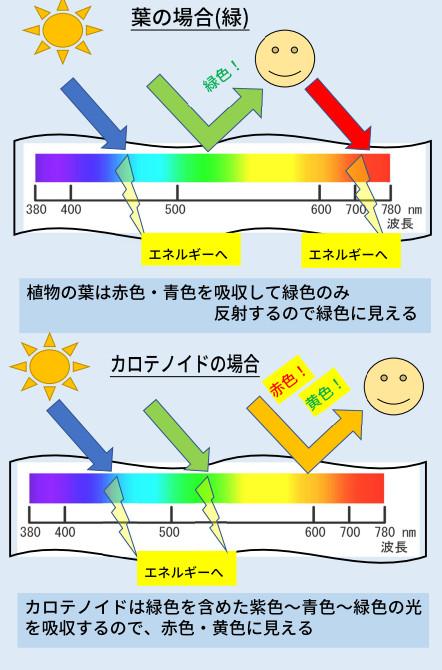 https://www.rokkou-co.jp/wp/wp-content/uploads/2021/02/%E3%82%AB%E3%83%AD%E3%83%86%E3%83%8E%E3%82%A4%E3%83%891.jpg